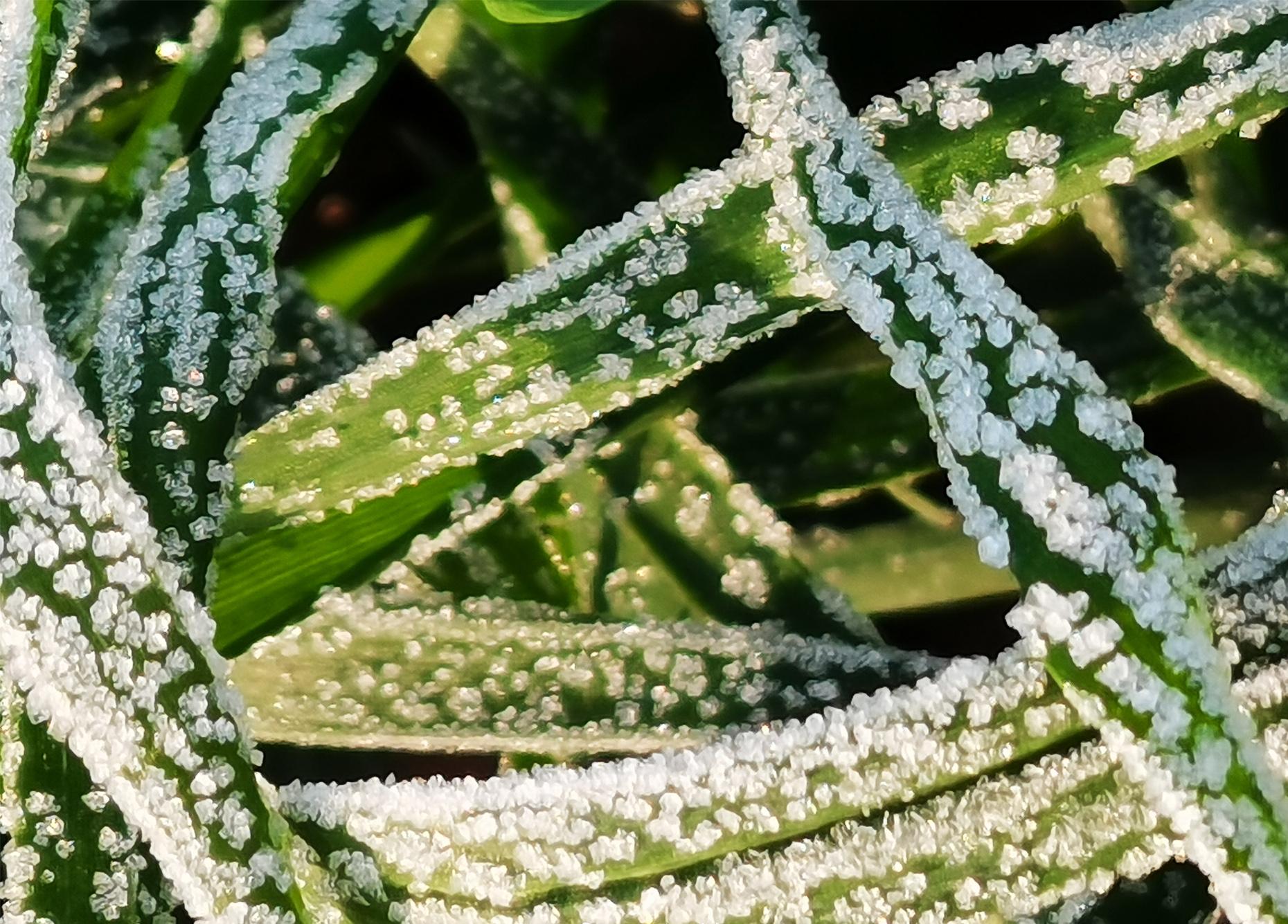 大自然中的霜粒子