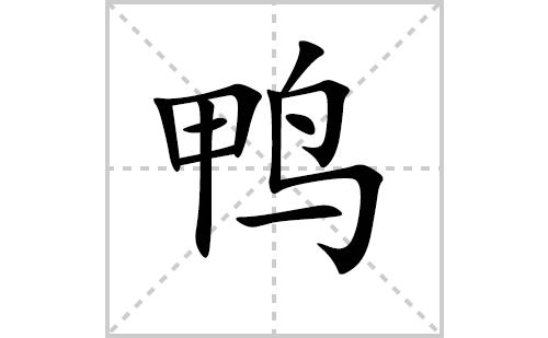 鸭的笔顺笔画怎么写(鸭的笔画、拼音、解释及成语详解)