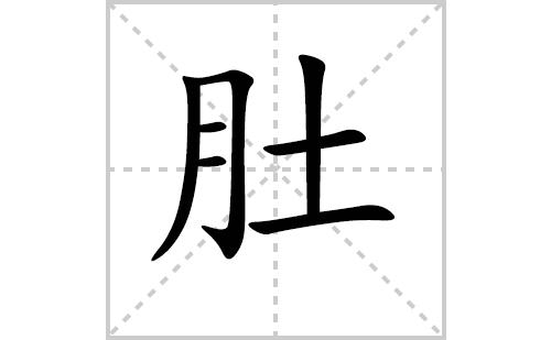 肚的笔顺笔画怎么写(肚的笔画、拼音、解释及成语详解)