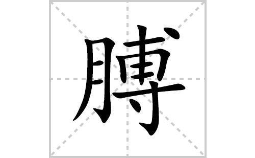 膊的笔顺笔画怎么写(膊的拼音、部首、解释及成语解读)