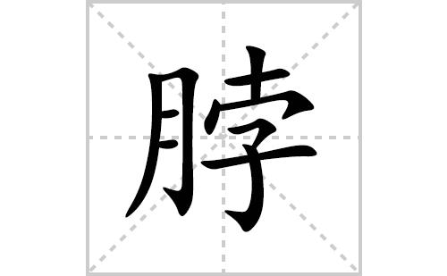 脖的笔顺笔画怎么写(脖的拼音、部首、解释及成语解读)