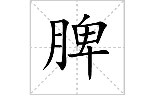 脾的笔顺笔画怎么写(脾的拼音、部首、解释及成语解读)